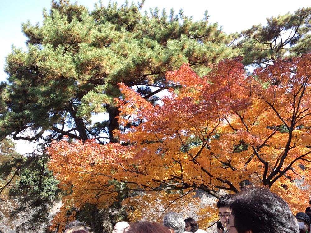 同じ紅葉が連なるのではなく、1本ごとに色がちがう。