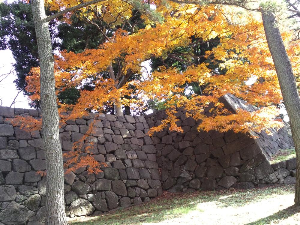 大きな石を使った石垣がきれいなカーブをしている。