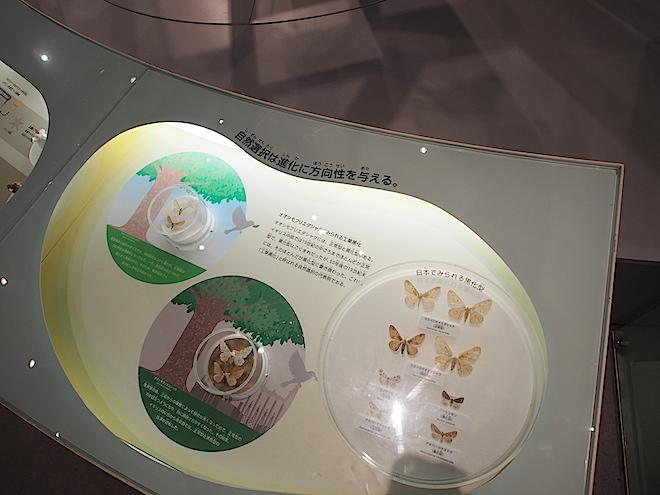 自然選択は進化に方向性を与えるという展示