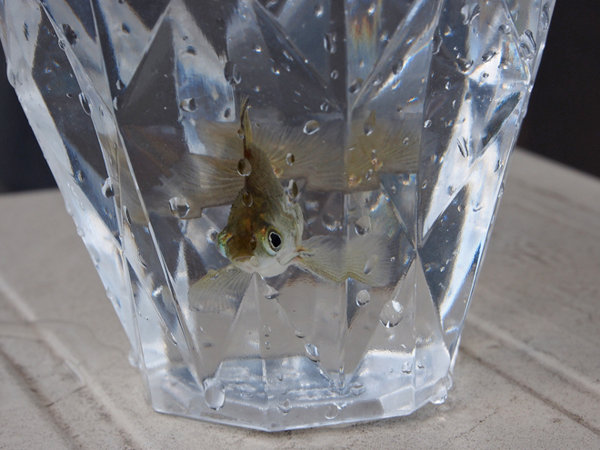 水合わせに使うプラスチックカップ