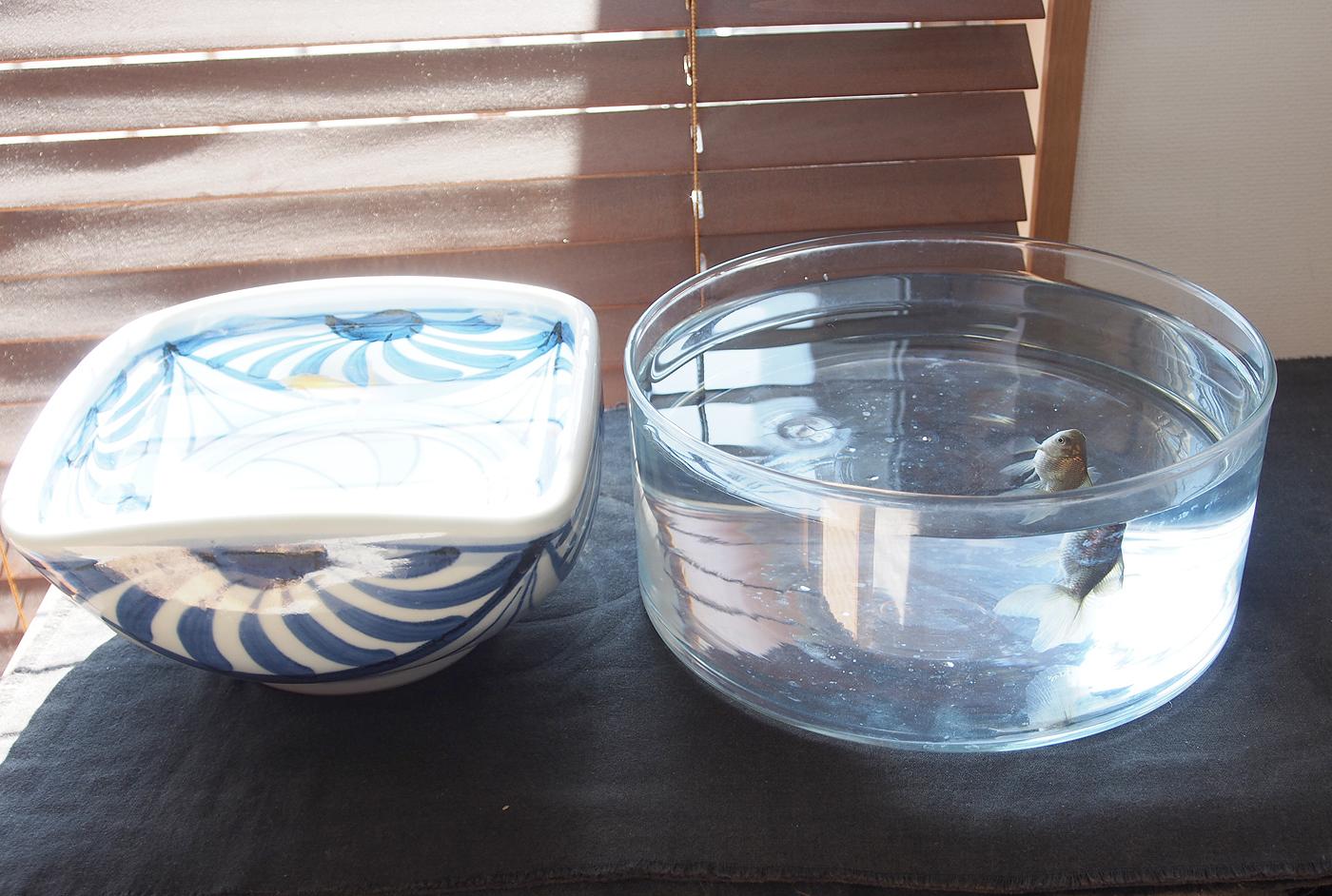 窓際のどんぶり金魚と水鉢