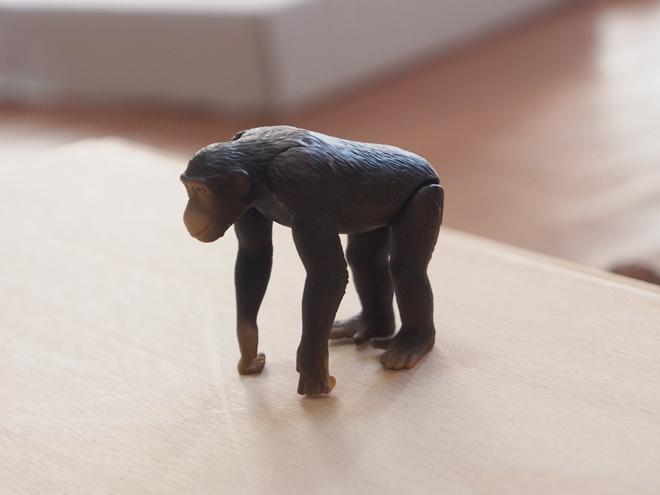ステージの上のチンパンジー