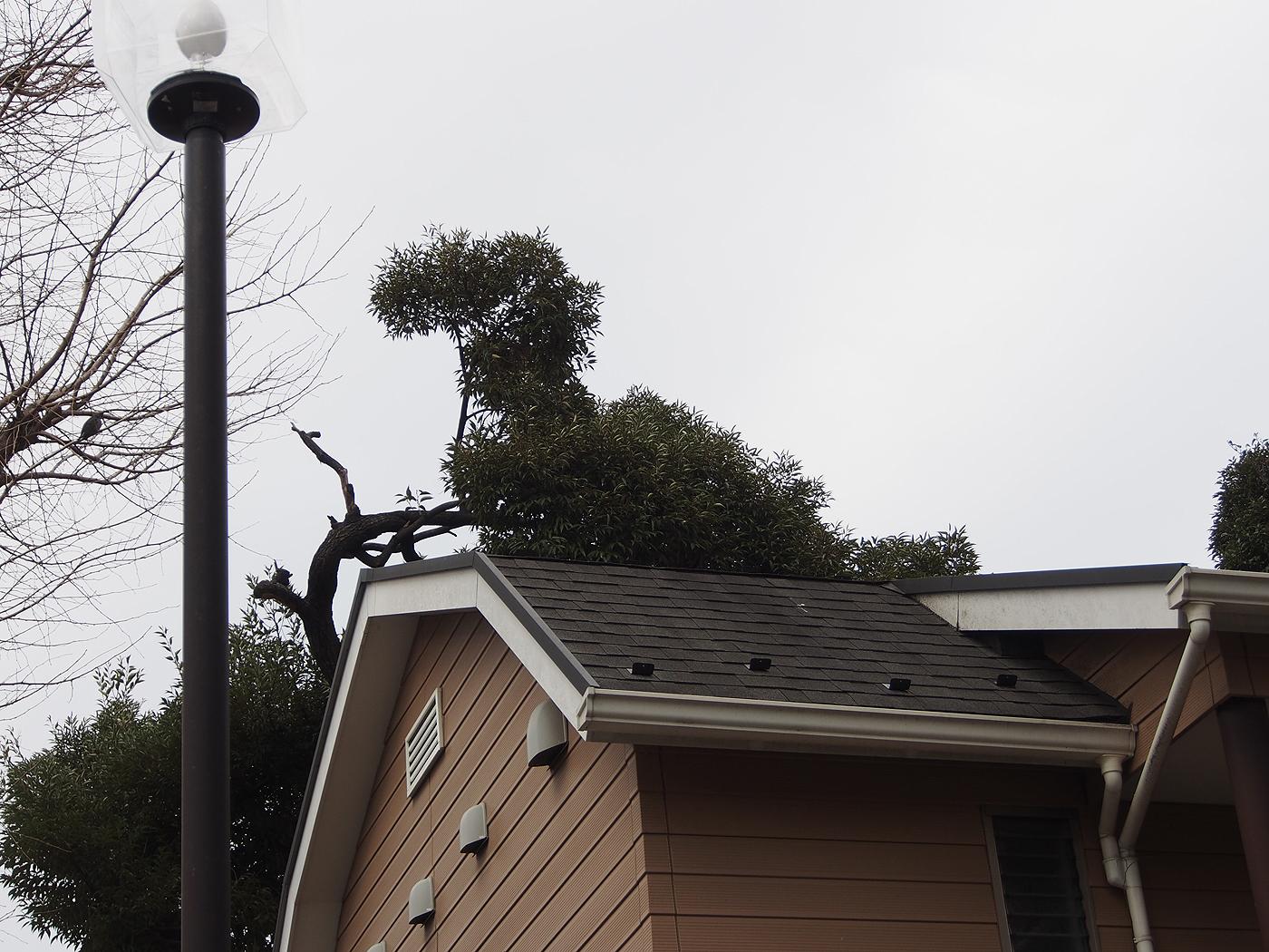 恐竜に似た景色、屋根のむこうの木