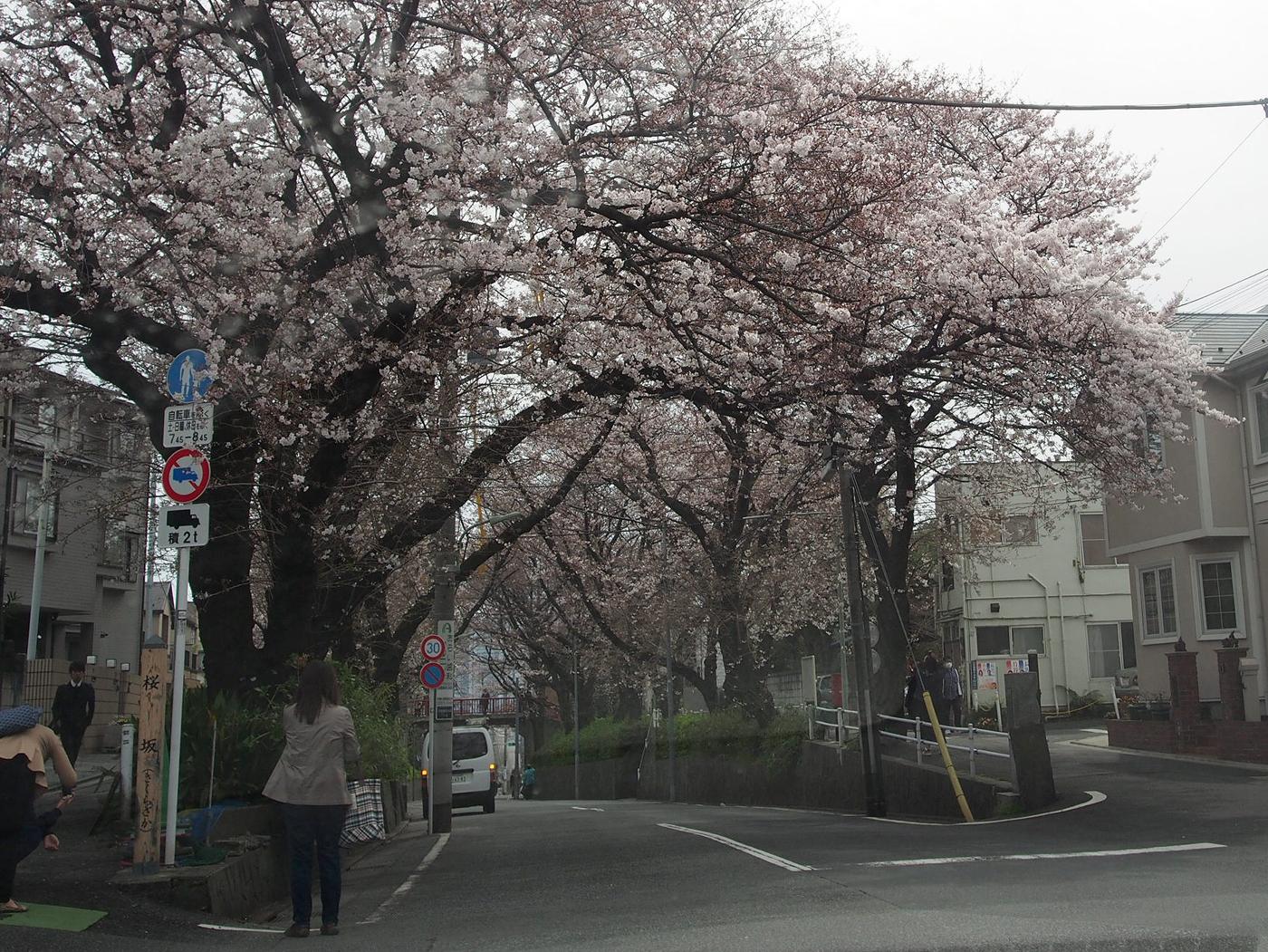 桜坂3/31