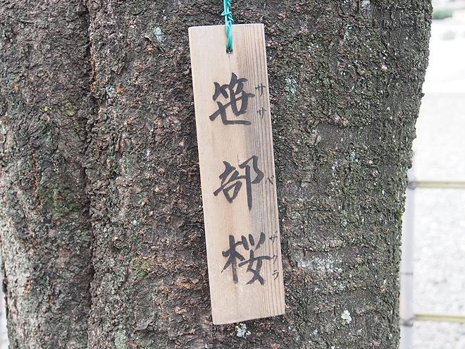 笹部桜、札