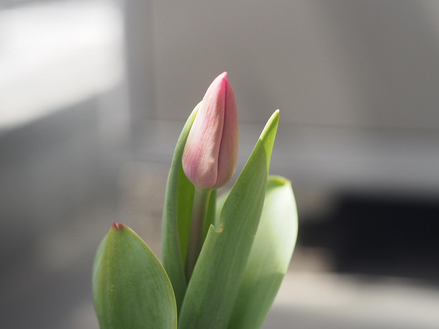 花がさきそう