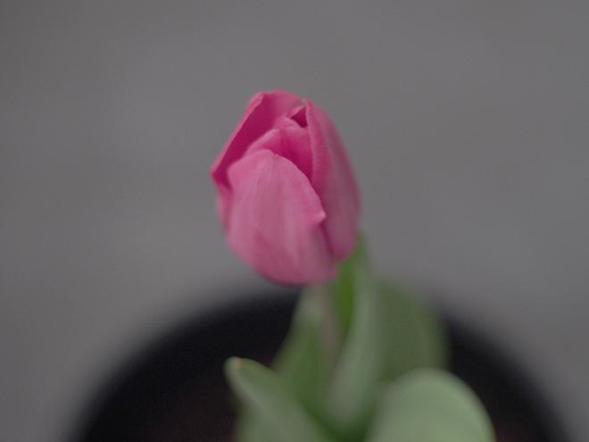 3日目、花が閉じた