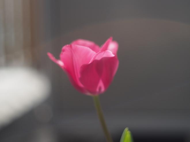 咲いて8日目、アップ