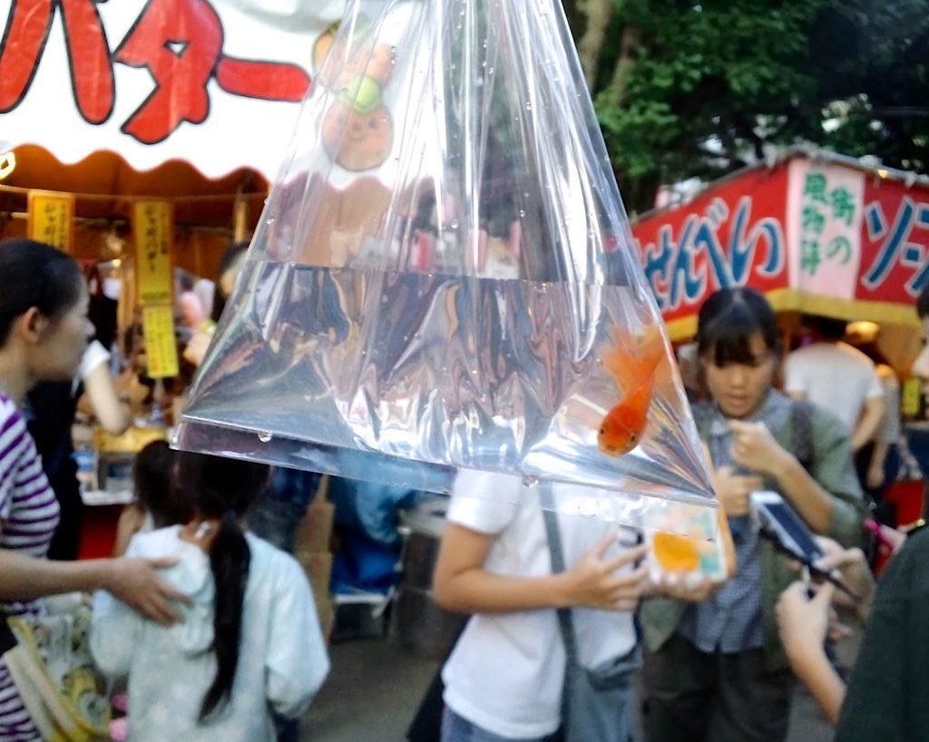 お祭りで金魚ゲット