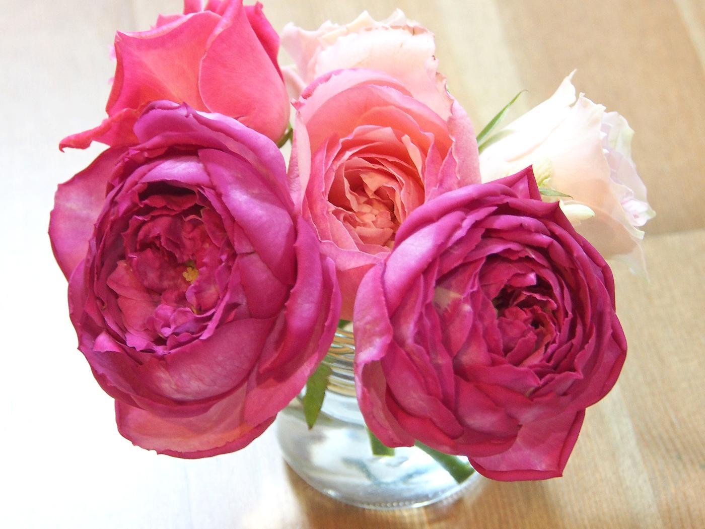 バラの花たち