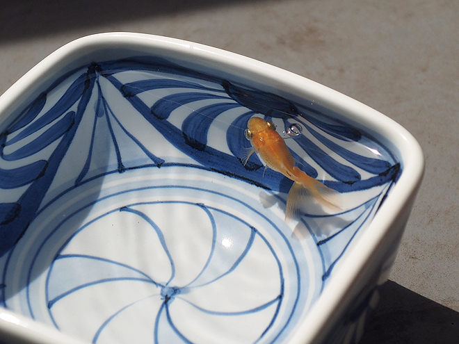 ベランダのどんぶり金魚