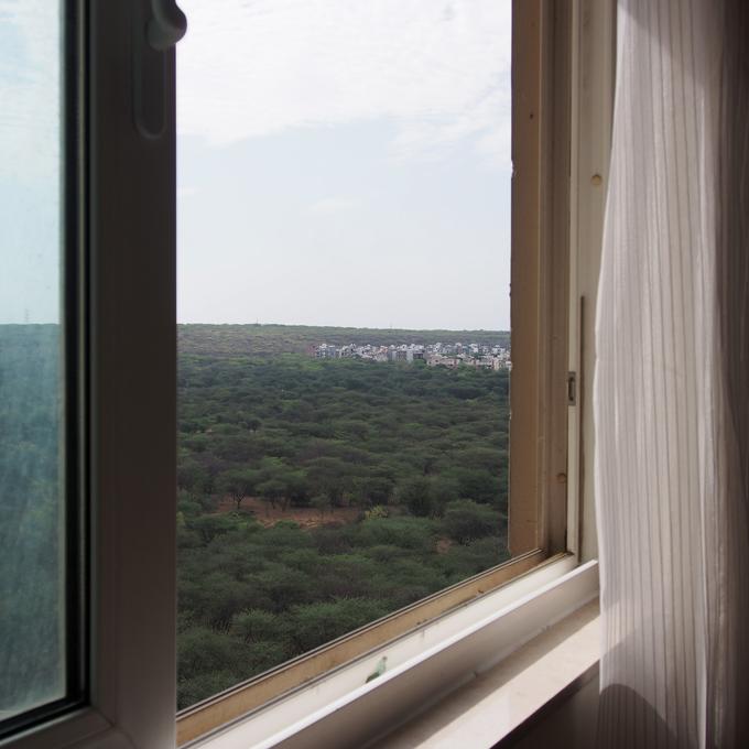 東の窓から、森が見える