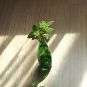 水に挿した観葉植物